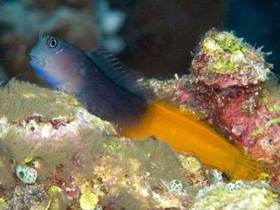 Аквариумные рыбки собачка эксен