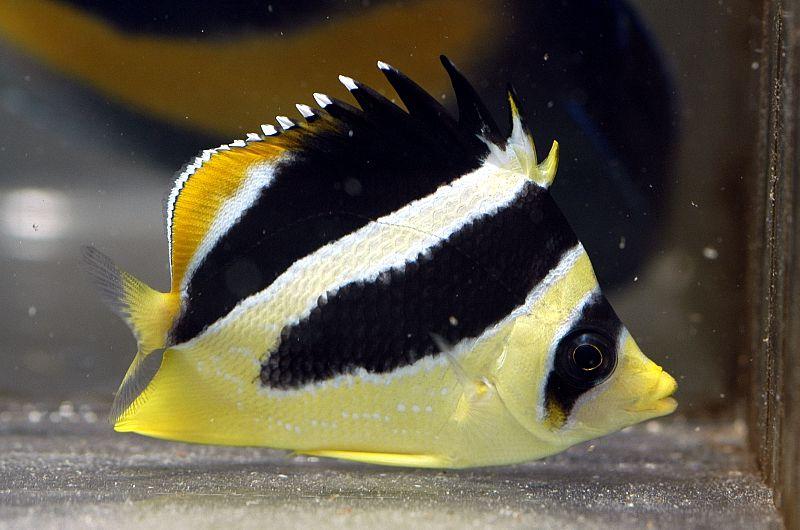 Каталог рыбы. Опасные и полезные свойства рыбы