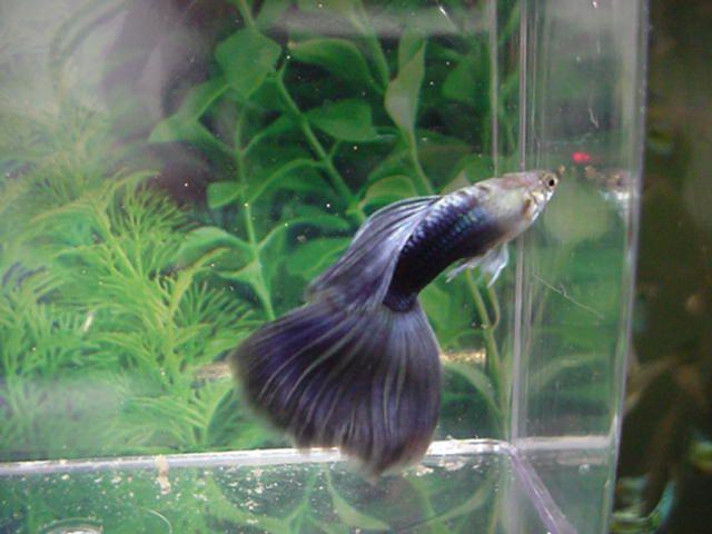 Рыбы живущие без компрессора