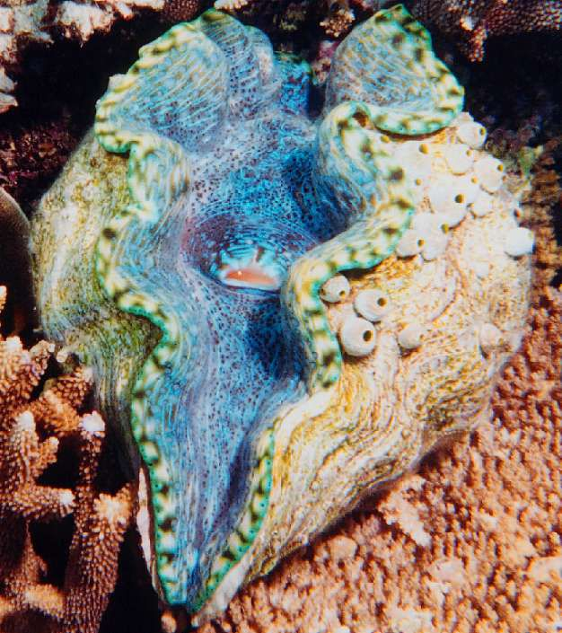 10 Fascinating Facts About Morays  Mental Floss